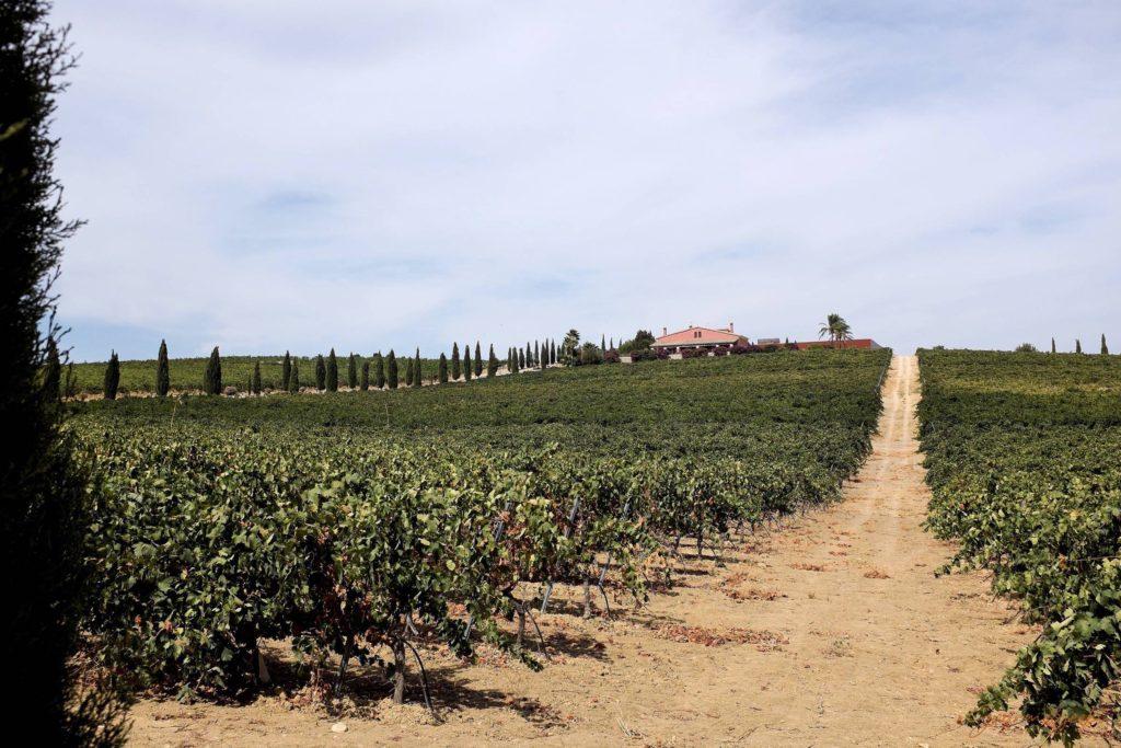 ...gelegen inmitten der Weinberge von Jerez...