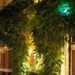 Versteckt hinter Grün