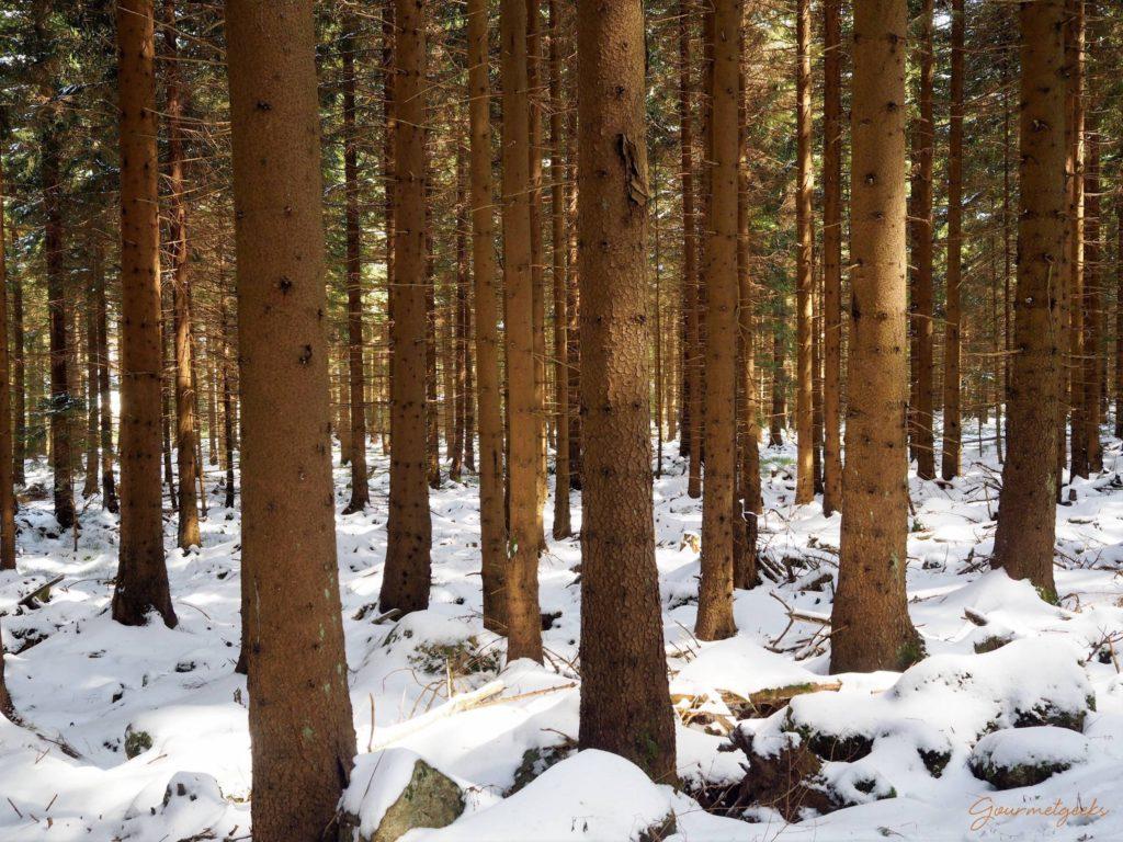 Sonne & Steine im Wald